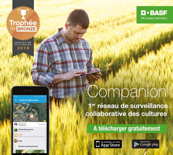 basf-companion-2019
