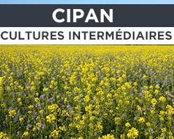 CIPAN / Cultures intermediaires