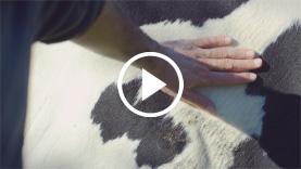 Video Florian