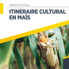 Itinéraire cultural en Maïs