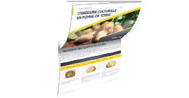 Dossier technique pomme de terre