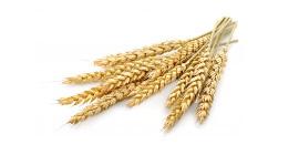 Nouvelle campagne céréales à paille